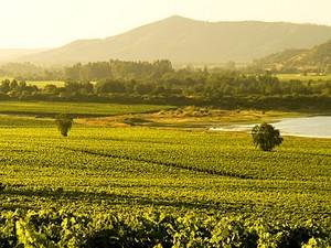 Vignobles chilien
