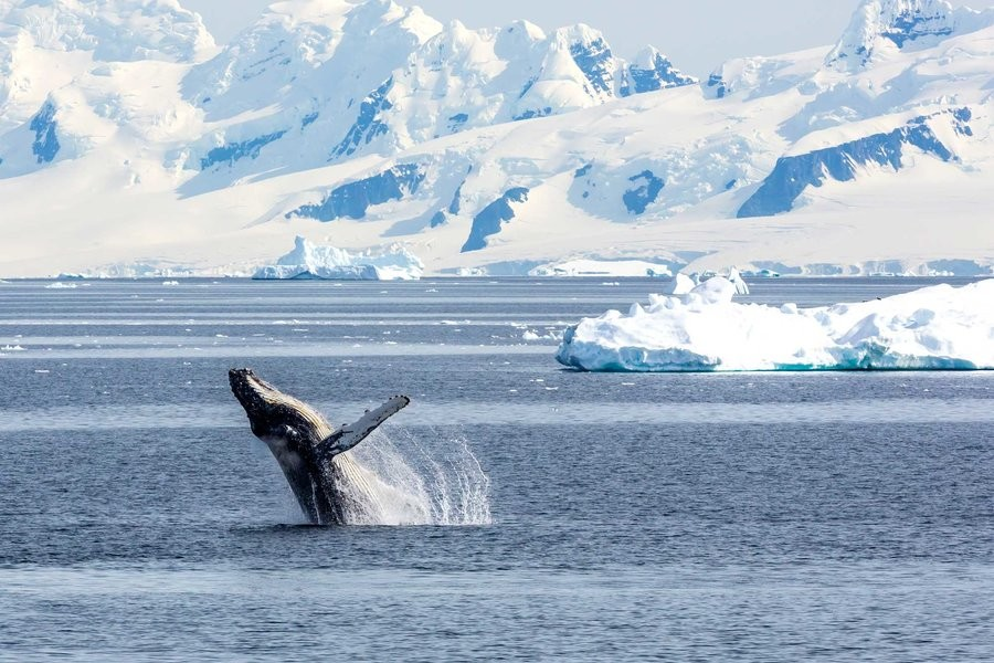Baleines Antarctique