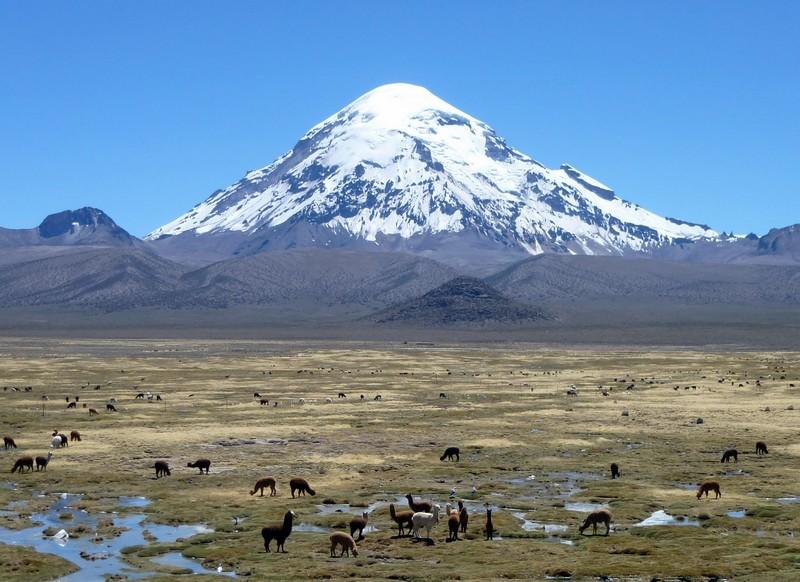 Montagne Nevado Sajama Bolivie